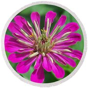 Round Beach Towel featuring the photograph Zinnia Opening by Eunice Miller