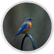 Eastern Bluebird On Perch 2 Round Beach Towel