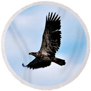 Round Beach Towel featuring the photograph  Juvenile Bald Eagle by Peggy Franz