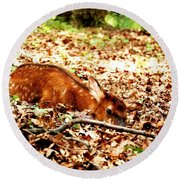 Round Beach Towel featuring the photograph  Sweet Baby Elk by Peggy Franz