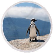 African Penguin Round Beach Towel
