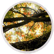 Beneath The Autumn Wolf River Apple Tree Round Beach Towel by Angie Rea