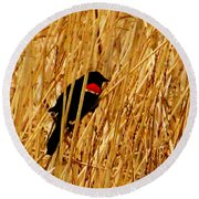 Blackbird In The Reeds Round Beach Towel