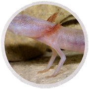 Blind Salamander Round Beach Towel