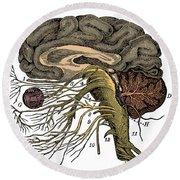 Brain And Cranial Nerves Round Beach Towel