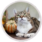 Cat And Pumpkins Round Beach Towel