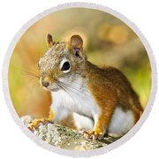 Cute Red Squirrel Closeup Round Beach Towel by Elena Elisseeva
