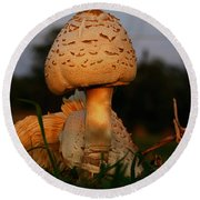 Round Beach Towel featuring the photograph Evening Mushroom by Karen Harrison