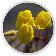 Round Beach Towel featuring the photograph Desert Evening Primrose by Joe Schofield