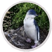 Fairy Penguin Round Beach Towel