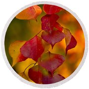 Round Beach Towel featuring the photograph Fall Color 1 by Dan Wells