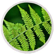 Round Beach Towel featuring the photograph Fern Seed by Sharon Elliott