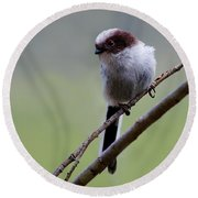 Long Tailed Tit Round Beach Towel