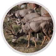 Mule Deer Bucks Round Beach Towel