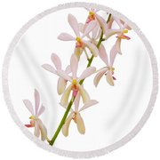 Round Beach Towel featuring the photograph Orchid Panicle by Atiketta Sangasaeng