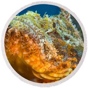 Papuan Scorpionfish Lying On A Reef Round Beach Towel