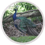 Round Beach Towel featuring the photograph Peacock by Donna  Smith