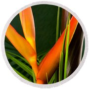 Photograph Of A Parrot Flower Heliconia Round Beach Towel