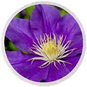 Purple Clematis Flower Round Beach Towel