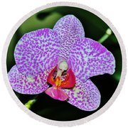 Round Beach Towel featuring the photograph Purple Orchid by Sherman Perry