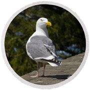 Round Beach Towel featuring the photograph Seagull by David Gleeson