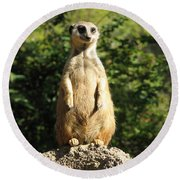 Round Beach Towel featuring the photograph Sentinel Meerkat by Carla Parris