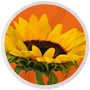 Sunflower Closeup Round Beach Towel