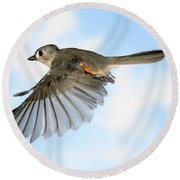 Tufted Titmouse In Flight Round Beach Towel