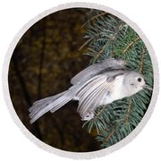 Tufted Titmouse In Flight Round Beach Towel by Ted Kinsman