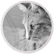 Flitwick The Cat Round Beach Towel by Jeannette Hunt