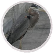 Great Blue Heron Round Beach Towel by Donna Brown