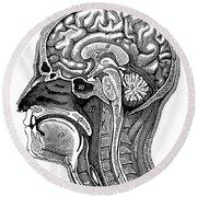 Head And Brain Anatomy Round Beach Towel