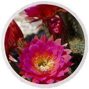 Pink Cactus Flowers Round Beach Towel by Jim And Emily Bush