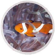Tropical Fish Clownfish Round Beach Towel