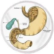 Illustration Of Stomach And Duodenum Round Beach Towel