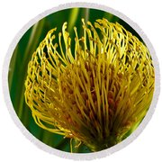 Picture Of A Pincushion Protea Round Beach Towel