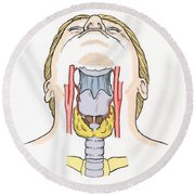 Illustration Of Throat Anatomy Round Beach Towel