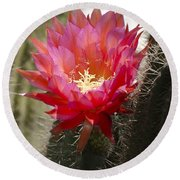 Red Cactus Flower Round Beach Towel by Jim And Emily Bush