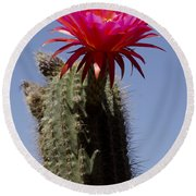 Pink Cactus Flower Round Beach Towel by Jim And Emily Bush