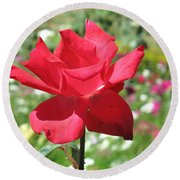 Round Beach Towel featuring the photograph A Beautiful Red Flower Growing At Home by Ashish Agarwal