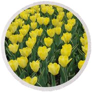 A Field Of Yellow Tulips In Spring Round Beach Towel by Eva Kaufman