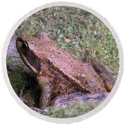 Round Beach Towel featuring the photograph A Friendly Frog by Chalet Roome-Rigdon