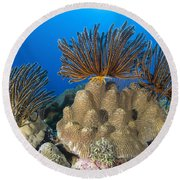 A Gathering Of Crinoid Feather Stars Round Beach Towel