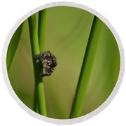 Round Beach Towel featuring the photograph A Jumper In The Grass by JD Grimes