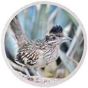 A Juvenile Greater Roadrunner  Round Beach Towel by Saija  Lehtonen
