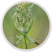 Round Beach Towel featuring the photograph A Meal Of Lace by JD Grimes