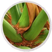 Round Beach Towel featuring the photograph A Palmetto's Elbows by JD Grimes