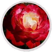 Round Beach Towel featuring the photograph A Unique Rose by Karen Harrison
