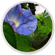 Round Beach Towel featuring the digital art Aging Morning Glory by Debbie Portwood