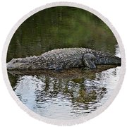 Alligator 1 Round Beach Towel